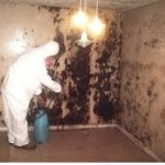 Mold Remediation in Boca Raton