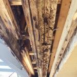 Eliminate household mold