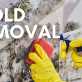 Mold Removal: How to Getting Rid of Mold